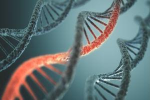 Когда можно делать тест ДНК